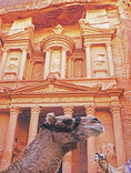 Camels at The Treasury in Petra.