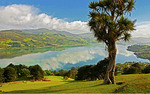 Cabbage tree overlooking Otago Harbour from Otago Peninsula, Dunedin, New Zealand.