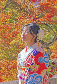Young Japanese woman in kimono enjoying sunny day in autumn in Kyoto.