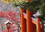 Chureito Pagoda torii gate and autumn color.