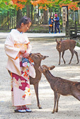Young woman wearing kimono attracting deer seeking food in Nara, Japan.