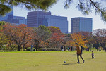 Families on playing field of Tokyo's Imperial Palace East Gardens in autumn.