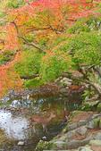 Nara deer in stream in autumn.