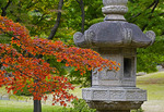 Stone lantern and maple leaves in autumn at Shinjuku Gyoen National Garden in Tokyo.
