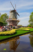 Keukenhof Gardens tulips and windmill in spring in Holland.