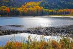 Autumn foliage along pond in Acadia National Park, Bar Harbor, Maine.