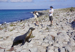 Tourist in Galapagos Islands photographing a sea lion on rocky shore.