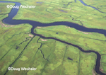 Mosquito ditches in saltmarsh - aerial view.