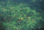 Tropical forest canopy - Guyana aerial photo