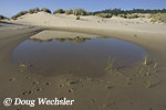 Ephemeral pool in dune swale
