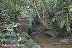 Tropical Mountain Stream; 