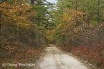   Pine Barrens; NJ, road in White's Bog