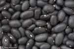 Black bean; Phaseolus vulgaris