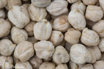 Chickpea or Garbanzo Bean; Cicer arietinum; One of world's earliest cultivated vegetables