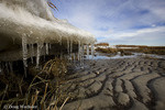 Icicles in salt marsh, NJ, Delaware Bay, Egg Island WMA,