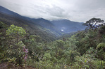 Habitat Destruction from Highway construction; Tapichalaca Reserve; Ecuador, Zamora Chichipe