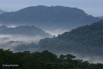 Soberania National Park, dawn fog in rainforest hills taken from top of Canopy Tower lodge