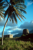 Palm Tree & Abandoned Sugar Mill, St. Kitts, Caribbean
