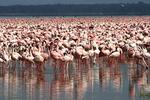 Flamingos4, Kenya, Africa