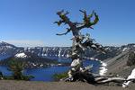 Crater Lake & Tree, Oregon