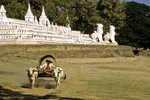 Mingun & Bullock Cart1, Myanmar (Burma)
