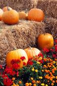 Pumpkins on Hay bales, Appleton, Wisconsin