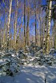 Woods in Winter, Door County, Wisconsin