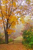 Plamann Park in Fog, Appleton, Wisconsin