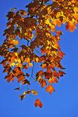 Fall leaves, Appleton, Wisconsin