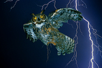 Owl and Lightning, Tucson, Arizona