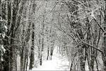 Path in woods in winter, Appleton, Wisconsin