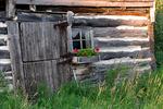Old Barn & Flowers, Jacksonport, Door County, Wisconsin