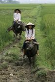 Girls Riding Water Buffalo, Sa Pa, Vietnam