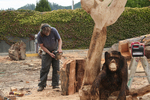Chainsaw Carver, Reedsport, Oregon