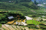 Terraced Fields in Countryside, Sa Pa, Vietnam