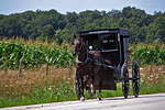 Amish Buggy on Road, Shipshewana, Indiana