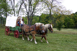 Wagon and Horses, Wade House, Wisconsin Historic Site, Greenbush, Wisconsin