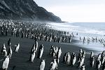 Chinstrap Penguins at Bailey Head, Antarctica