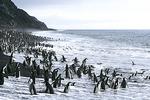 Penguins in water at Bailey Head, Antarctica