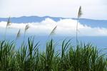 Sugar Cane and Clouds, Maui, Hawaii