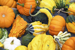 Gourds in Fall, Appleton, Wisconsin