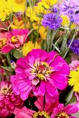Zinnia in Fall Bouquet, Appleton, Wisconsin