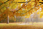 Park in Fog with Swings and Fall Color, Appleton, Wisconsin