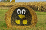 Hay Bale Face in Fall, Hortonville, Wisconsin
