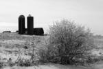 Farm and Ice Bush in Winter, Prairie du Chien, Wisconsin