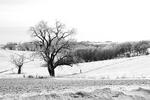 Landscape in Winter in Black and White, Prairie du Chien, Wisconsin
