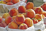 Peaches for Sale, Farmer's Market, Holland, Michigan