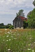 Old Barn & Wildflowers, Bailey's Harbor, Door County, Wisconsin