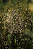 Spider Web in Marsh, Munising, Michigan