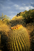 Cactus on